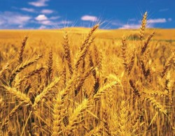 Veste bună pentru agricultori! Ministerul Agriculturii a anunţat prelungirea sesiunii de depunere a proiectelor de investiţii