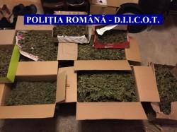 Traficant arădean prins în flagrant cu 70  de grame de cannabis, acasă mai avea 5 kg