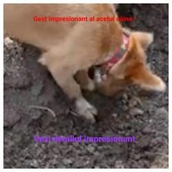 (VIDEO) Impresionant cum un câine îngroapă alt câine călcat de maşină ! Internauții au observat în filmuleț, un detaliu rar întâlnit