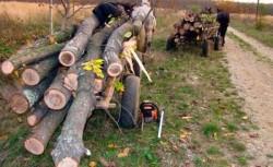 Tăiere ilegală de arbori