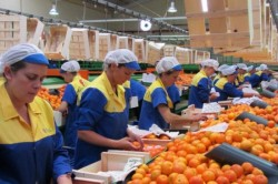 Spaniolii caută muncitori români pentru ambalat fructe şi verdeţuri