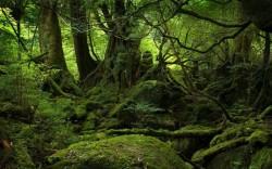 Holzindustrie Schweighofer renunţă la exploatarea pădurilor virgine din România