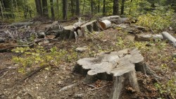 """USR Arad condamnă votul Parlamentului pentru """"liber la jaful pădurilor"""""""