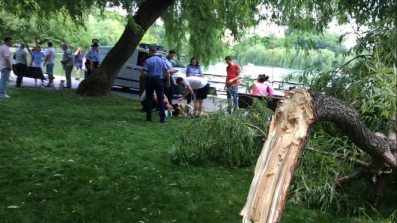 Bărbat rănit grav de o creangă uriașă care s-a rupt din copac !