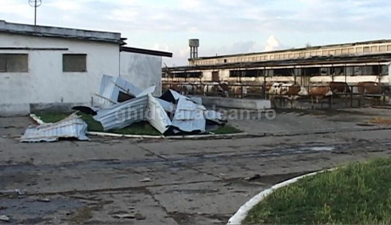 Stațiunea de Cercetare-Dezvoltare pentru Creșterea Bovinelor afectată grav de furtuna de vineri. Vor primi ajutor de stat pentru daune (Galerie FOTO)