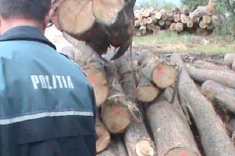Bărbat din Buteni, cercetat pentru tăiere ilegală de arbori