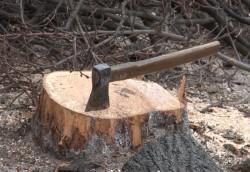 PSD naționalizează dezastrul din păduri!