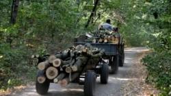 Tractor neînmatriculat, încărcat cu lemne tăiate ilegal, oprit de poliţiştii din Arad