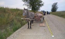 FOTO- Calul contrabandist! Doi români, prinşi de Poliţia de Frontieră în timp ce transportau ţigări de contrabandă cu căruţa