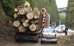 Călăii pădurilor se emancipează! Află ce metodă a folosit un hoţ de lemne din Arad pentru a fenta vigilenţa poliţiei!