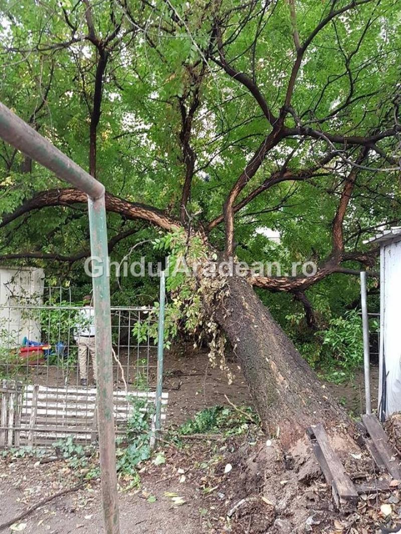 La un pas de tragedie! Un copac s-a prăbuşit între blocuri distrugând geamurile unei locuinţe şi peretele unui garaj!