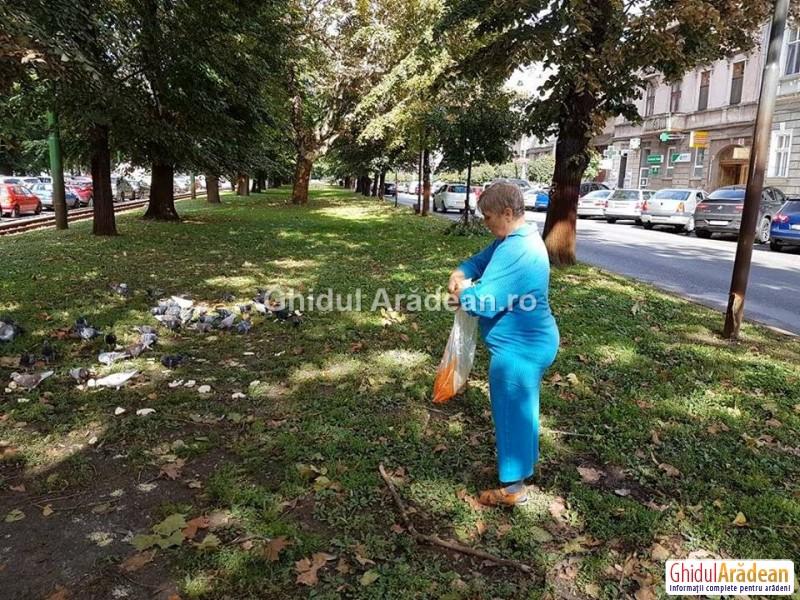 Porumbeii şi şobolanii din centrul Aradului, hăiniţi zilnic cu pâine şi ciorbă!