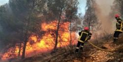 Incendiile de pădure, o problemă tot mai des întâlnită în România! Peste 1000 de hectare de pădure au ars în prima jumătate a anului!
