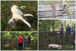 Câine ucis fără milă într-un cartier arădean. Un copil a văzut totul!