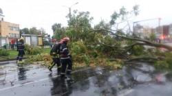 Arborii din municipiu consideraţi periculoşi vor fi înlocuiţi de către Primăria Arad