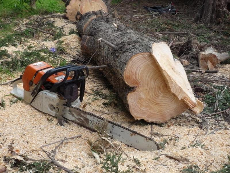 Hoţi de lemne prinşi în flagrant de către jandarmii arădeni