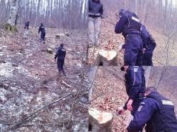 I-au prins tăind ilegal arbori