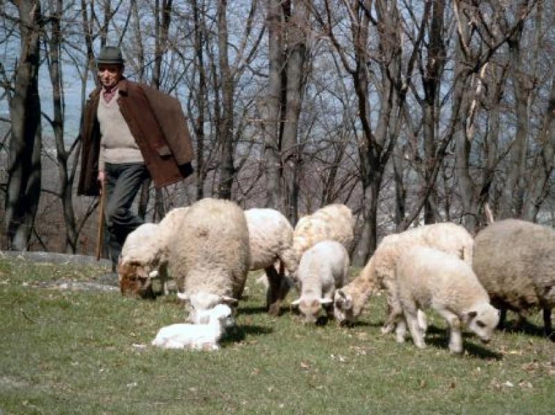"""De Buna Vestire, un cioban din Zădăreni """"a înviat din morţi"""""""