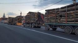 Transport ilegal de material lemnos oprit în trafic de polițiști