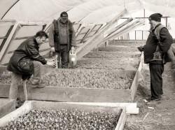 Când se plantează legumele în grădină ?
