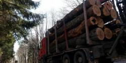 Transport ilegal de material lemnos, depistat și oprit de polițiști