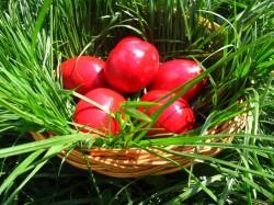 Cât timp avem voie să consumăm ouăle înroşite de Paşti ?