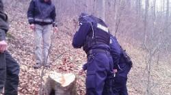 Prinşi la tăiat ilegal de arbori