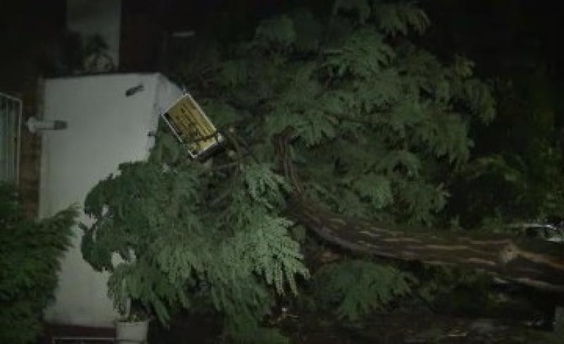 PRĂPĂD la Arad ! Vijelia de marți noaptea a doborât copaci pe străzi  !