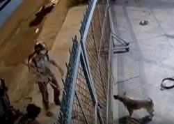 Cum se fură câinii în Vietnam pentru a fi mâncaţi - VIDEO ŞOCANT!