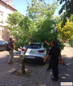 Copac căzut peste mașină pe Dragalina ! VEZI Galerie Foto