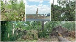Lupaș: Și pădurea Ceala este neglijată...