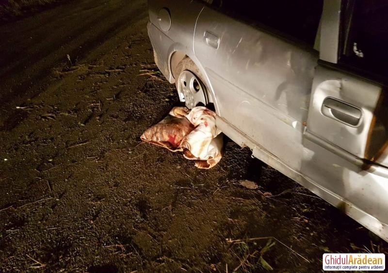 ACCIDENT de circulație, în această seară, pe drumul ce leagă Horia de Șiria ! VEZI Galerie Foto !