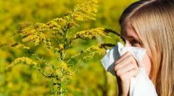 Cercetătorii de la Timişoara vor crea un vaccin împotriva alergiei la ambrozie