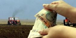 De luni începe plata avansului la subvențiile agricole pe 2017. AFLĂ câți bani primesc fermierii