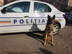 Pebaf, câinele poliţist care pune pe jar contrabandiştii de tutun