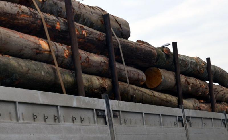 Captură record la Târnova! Transport ilegal de material lemnos, depistat de polițiști!