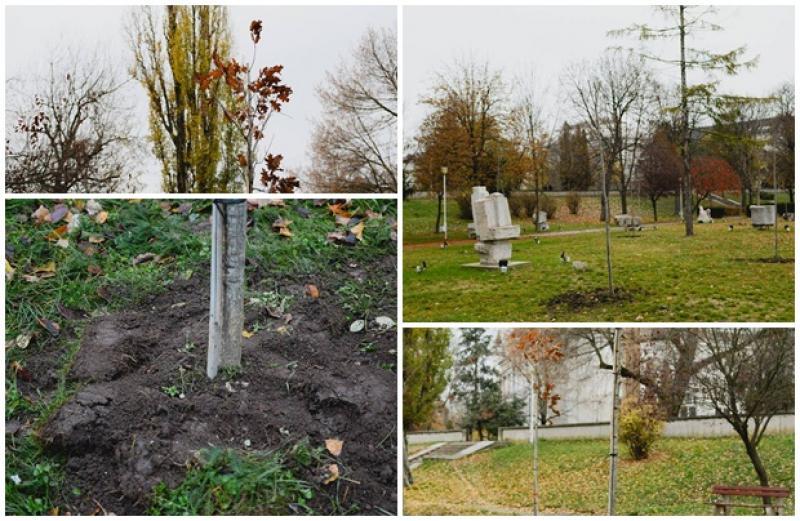 Plantarea de arbori continuă în municipiul Arad