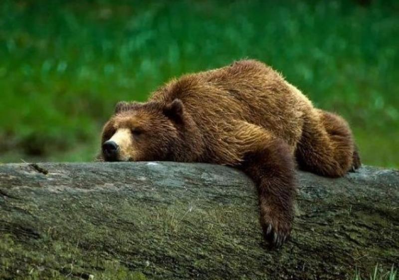 Cetăţean german cercetat penal pentru împuşcarea unui urs, în judeţul Arad