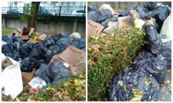USR reclamă neridicarea sacilor cu gunoi menajer din parcul Eminescu rămaşi de la Festivalul Vinului