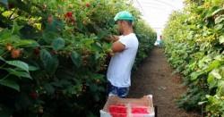 Muncitorii români, la mare căutare. ANOFM oferă 300 de locuri de muncă sezonieră în Portugalia