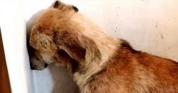 Sentinţă fără precedent! Un bărbat, condamnat la închisoare cu executare pentru cruzime faţă de animale