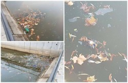 Groapa de gunoi din centrul Aradului. Mizeria, PET-urile şi porumbeii morţi au pus stăpânire pe lacul Pădurice