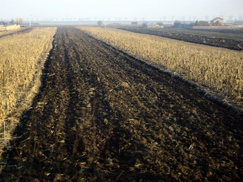 Judeţul Arad, în topul tranzacţiilor agricole. Află cât teren au cumpărat afaceriştii străini