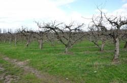 Fenomen neobişnuit în judeţul Arad! Temperaturile ridicate au dus la înmugurirea mai multor specii de copaci