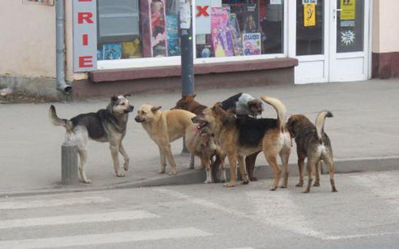Acţiune de amploare pentru capturare a câinilor comunitari anunţată de Gospodaria Comunală Arad