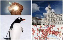 Ce sesizări transmit arădenii prin aplicaţia My Arad. Pinguin în libertate şi soarele frumos, raportat autorităţilor locale