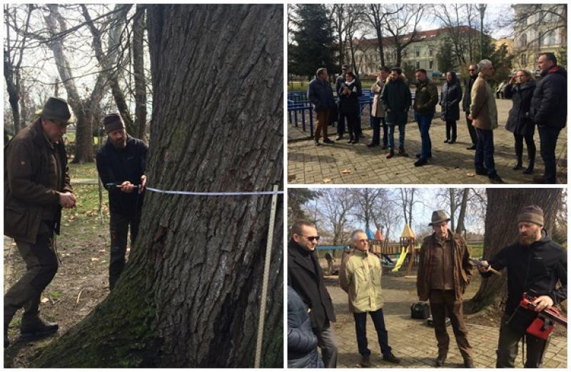 Calitatea spaţiilor verzi din Arad, în atenţia specialiştilor români şi maghiari