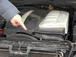 """Ce trebuie să faci dacă ai """"musafiri"""" la motorul mașinii?"""