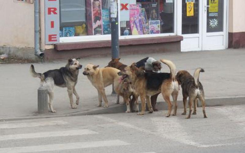 Câinii fără stăpân gestionaţi după regulament