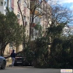 Mașină distrusă de un copac ce a căzut peste ea
